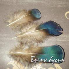 Перо павлина, натуральное, с сине-зеленым переливом,  длина 5-9 см (1 шт.)