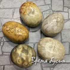 Коралл окаменелый, галтовка из натур. камня весом 33-35 гр.      (1 шт.)